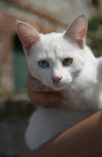 ill cat